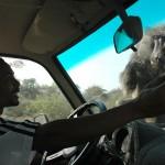 Teasing wild baboons