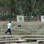 Public arena