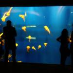 Aquarium Pictureshow