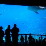 Watching People Watching Fish